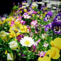 ジューンブライドの季節の花