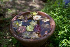水鉢に落ちた花